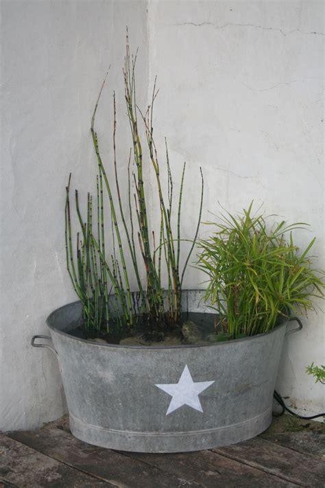 plante exterieur en pot sans entretien ma fontaine avec papyrus pr 234 le et jacinthe d eau et un petit jet d eau fait