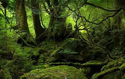 Endor Forest Forests Desktop Nature Jungle Woods