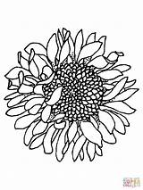 Sunflower Silhouettes Coloring Printable Pages Cool Jooinn Head sketch template