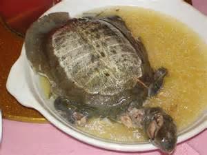 chinesische küche chinesische küche jtleigh hausgestaltung ideen