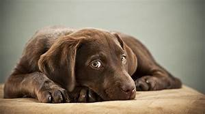 how to train your puppy to stop biting nipping With dog discipline classes