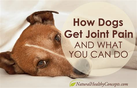 joint pain  dog      healthy