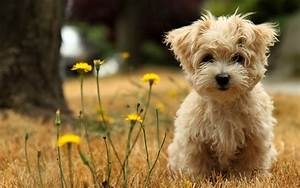 38 Cute Dog Pictures - InspirationSeek.com