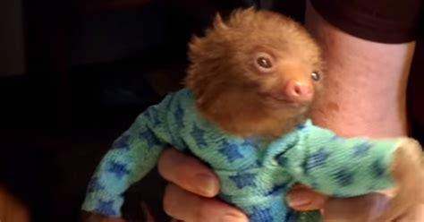 Cute Baby Sloth In A Onesie