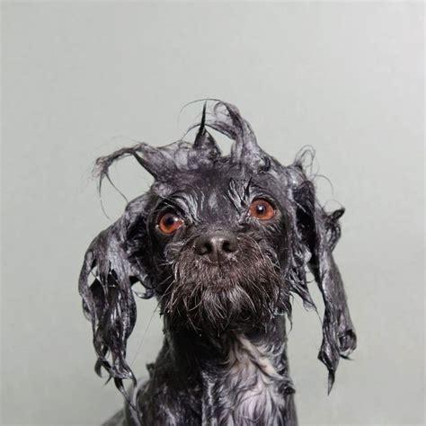 Adorable Wet Dog