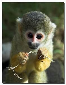 Fun Animal Facts To Help Save Animals Squirrel Monkey