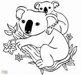 Koala Bear Baby Cartoon Coloring Pages Drawing Cute Tree Printable Koalas Animal Sheets Getdrawings Adult Preschool Neocoloring sketch template