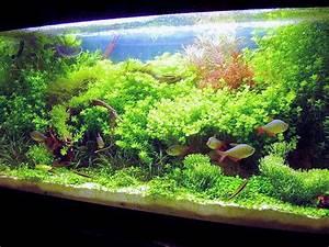 Aquarium 120l Mit Unterschrank : 120l micranthemum wald seite 2 aquarium forum ~ Frokenaadalensverden.com Haus und Dekorationen