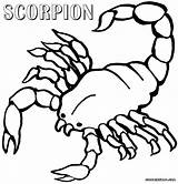 Coloring Scorpion Pages Scorpions Print Animal Popular sketch template