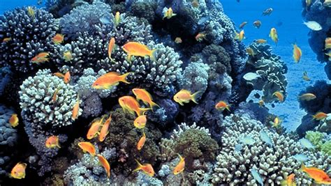 coral reefs  commonwealth
