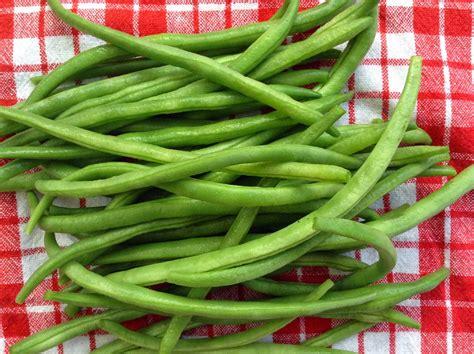 cuisiner les haricots verts frais comment cuisiner haricot vert surgele 28 images