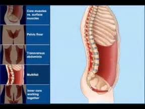 Pelvic Floor Muscle Exercises by Yoga Core Muscle Animation Youtube