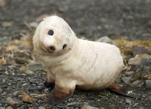 Cute Baby Animals Free Desktop Backgrounds Pets - Litle Pups