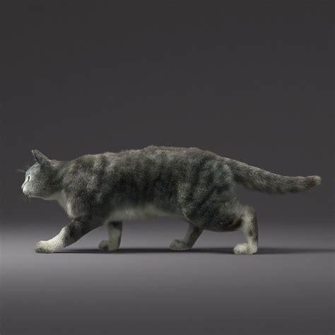 Domestic Cat Fur