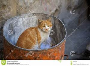 Homeless Cat. Royalty Free Stock Images - Image: 8648759