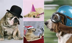 Hilarious Hounds In Hats Calendar Shows Dogs Getting All