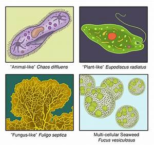 8.1: Protist Kingdom - Biology LibreTexts