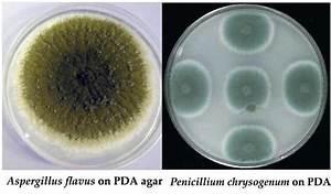 potato dextrose agar pda principle uses procedure