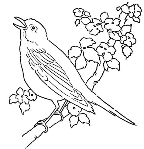 bird pictures to color bird coloring pages to and print for free