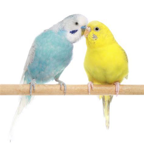 Comment Choisir Un Oiseau ?  Comment Choisir Un Oiseau