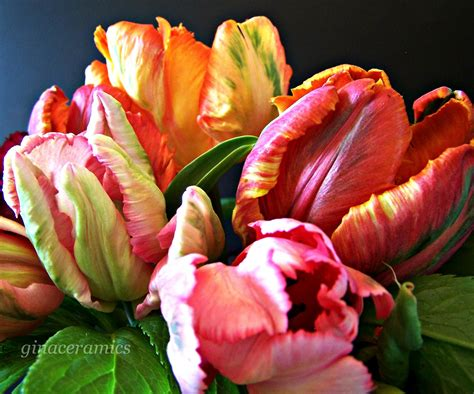 Not Just Another Tulip
