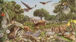 curso de ecologia