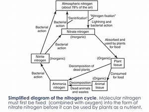 Hydrologic  U0026 Nutrients Cycle
