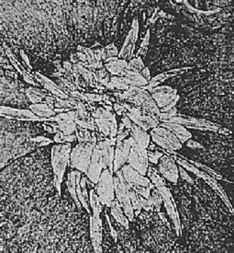 life   cambrian period