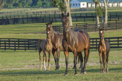 horse horses farm livestock agriculture pets bill american congress passes defining foal mare racing mares council