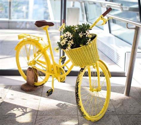 picture  life antique yellow bicycle flower