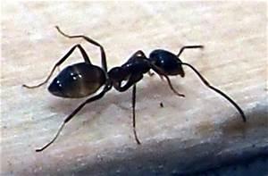 Ameisen In Der Wand : neue mitbewohnerinnen im wagen beside the road ~ Frokenaadalensverden.com Haus und Dekorationen