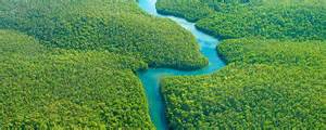 Amazon River Facts | KidsKonnect