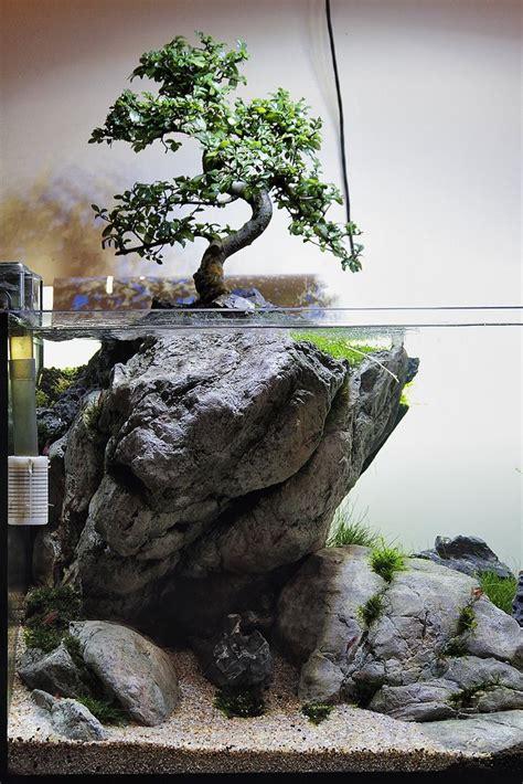 bonsai aquascape bonsai paludarium search aquascaping and
