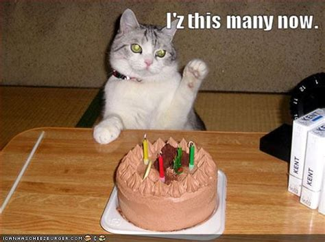 birthday cats birthday wishes clean and humor is always the