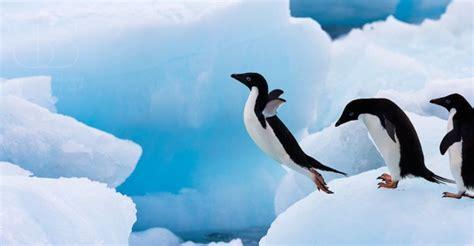 penguins wildlife nature photography photography