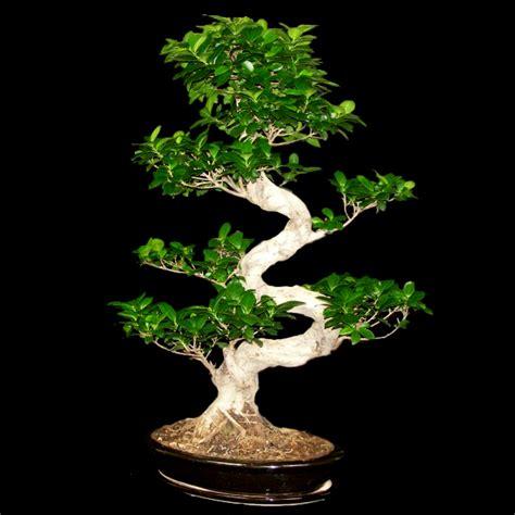 type de bonsai photo de fleur une pensee fleuriste