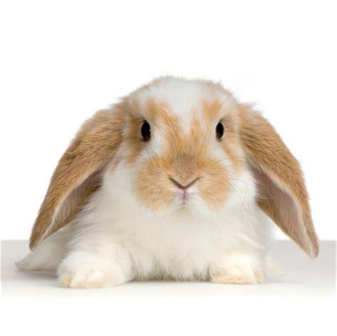 floppy ear bunny jamie s to buy list