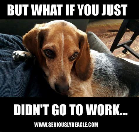 Beagle Memes - beagle meme of the day seriously beagle