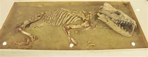 1000 Images About Mammalia On Pinterest Prehistoric