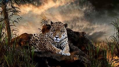 Screensavers Wildlife Wallpapers Wild Animal Pc Widescreen