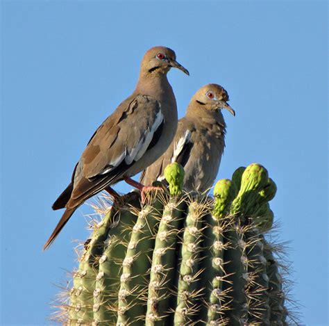 chambre d hotes troglodyte le cactus saguaro et ses hôtes chambre237