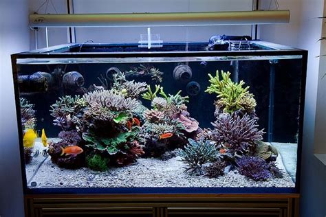 reef aquascaping ideas 5 3 theory reefs magazine aesthetics of aquascaping