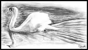 Nature Pencil Sketch Drawings