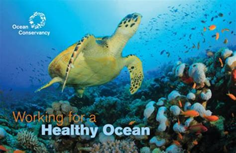 digital internships  ocean conservancy helpgoabroad