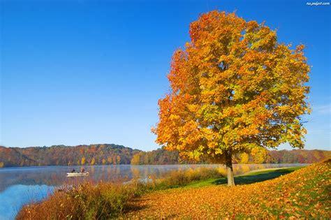 Liście, Drzewo, Jesień, Jezioro Na Pulpit