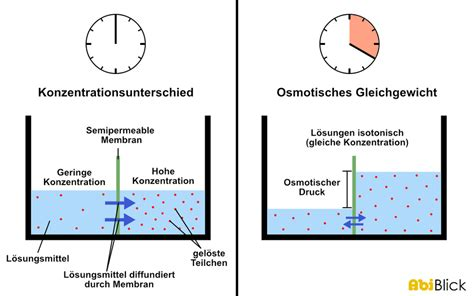 was ist diffusion osmose abiblick de