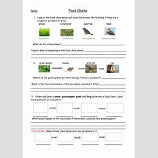 Food Chains Full Lesson With Worksheets, Plan And Food Web Extension (year 2key Stage 2) By
