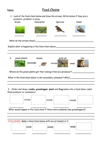 food chains lesson with worksheets plan and food web