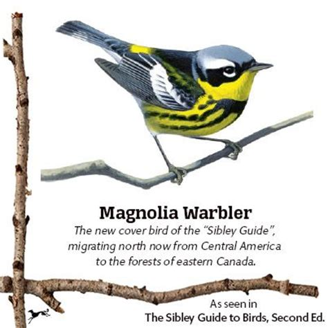 17 best images about the sibley guide to birds second