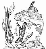 Bass Fishing Clipart Burning Fish Wood Stencils Patterns Clip Pyrography Drawing Coloring Peacock Drawings Fisch Crafts Woodburning Genius Planning Trip sketch template